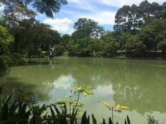 The lake in the botanic garden
