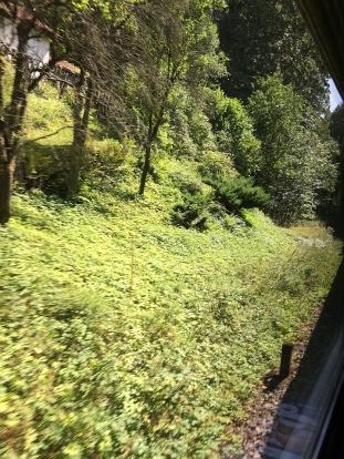 IMG_24_Wald vor der Grenze
