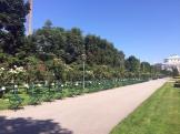 Rosengarten 2
